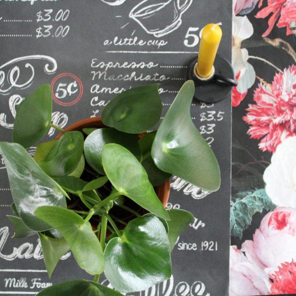 Beleggerscafe Rabobank pop-up